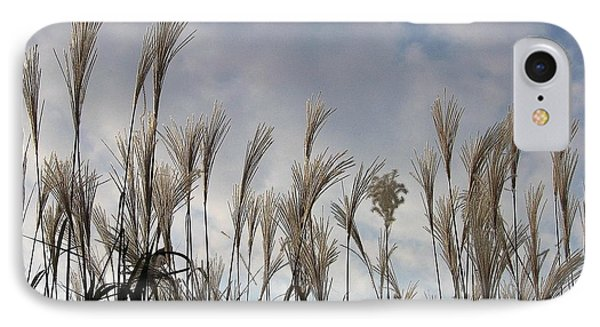 Tall Grasses And Blue Skies IPhone Case by Dora Sofia Caputo Photographic Art and Design