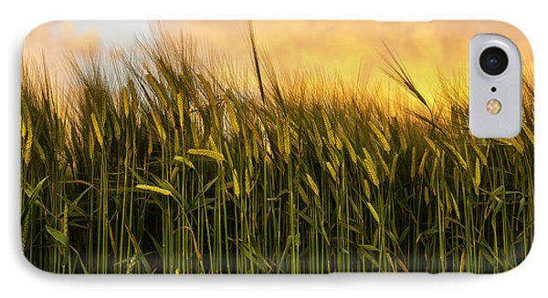 Tall Wheat Phone Case by Svetlana Sewell