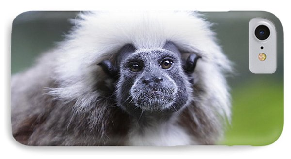 IPhone Case featuring the photograph Tamarins Face by Shoal Hollingsworth