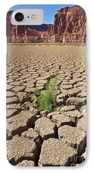 Tamarisk In Dry Colorado River IPhone Case by Yva Momatiuk John Eastcott