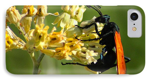Tarantula Hawk Wasp IPhone Case by Richard Stephen