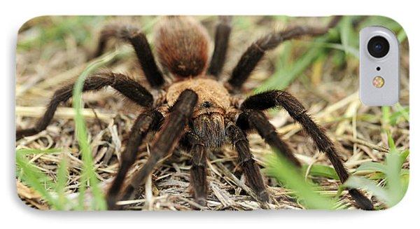 IPhone Case featuring the photograph Tarantula by Karen Slagle