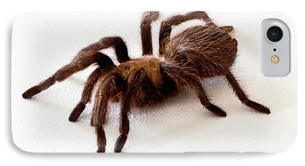 IPhone Case featuring the photograph Tarantula by Lawrence Burry