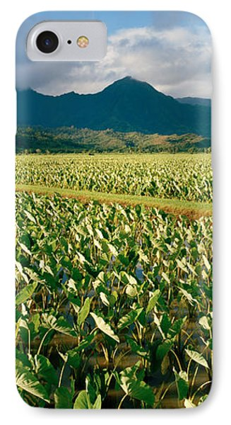 Taro Crop In A Field, Hanalei Valley IPhone Case