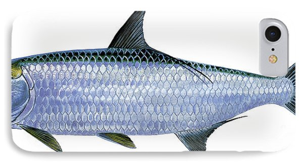 Tarpon IPhone Case