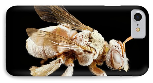 Tarsalia Bee IPhone Case by Us Geological Survey