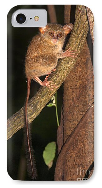 Tarsius Tarsier  IPhone Case by Sergey Lukashin