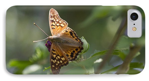 Tawny Emperor On Hibiscus IPhone Case by Shelly Gunderson