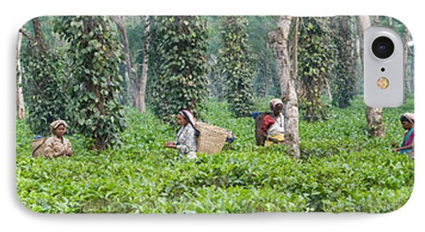 Tea Harvesting, Assam, India IPhone Case by Panoramic Images
