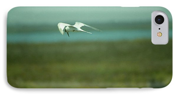 Tern In Flight IPhone Case by Bonnie Muir