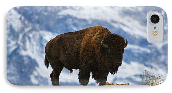 Teton Bison IPhone Case by Mark Kiver