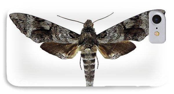 Tetrio Sphinx Moth IPhone Case