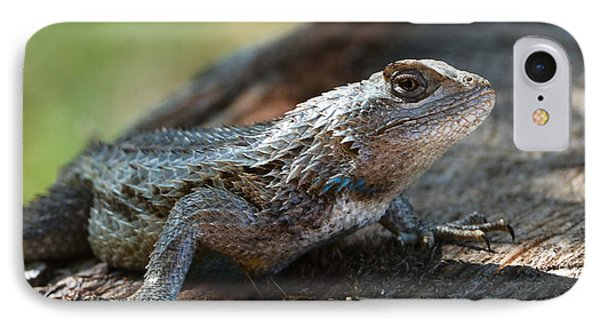 Texas Lizard IPhone Case