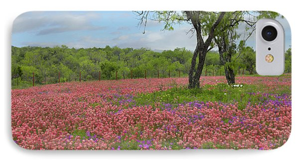 Texas Paintbrush And Pointed Phlox IPhone Case