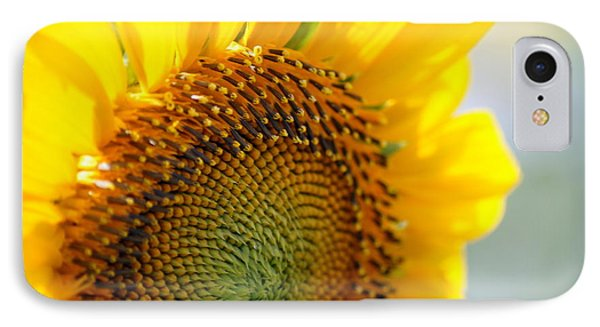 Texas Sunflower IPhone Case by Debi Demetrion