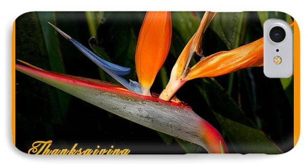 Thanksgiving Card Bird Of Paradise IPhone Case by Rosalie Scanlon