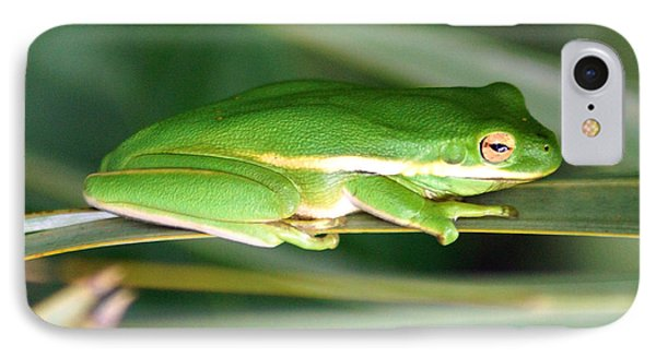 The American Green Tree Frog Phone Case by Kim Pate