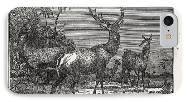 The Antelope, The Hart IPhone Case by Litz Collection