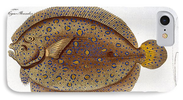 The Argus Flounder Phone Case by Andreas Ludwig Kruger