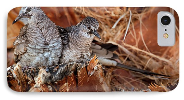 The Baby Inca Doves IPhone Case by Robert Bales