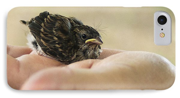 The Baby Wren Can't Fly IPhone Case by B Wayne Mullins