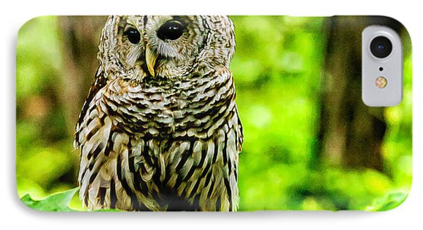 The Barred Owl Phone Case by Louis Dallara