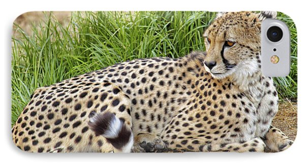 The Beautiful Cheetah IPhone Case by Jason Politte