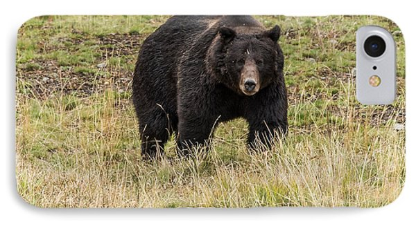 IPhone Case featuring the photograph The Big Black Grizzly Boar by Yeates Photography