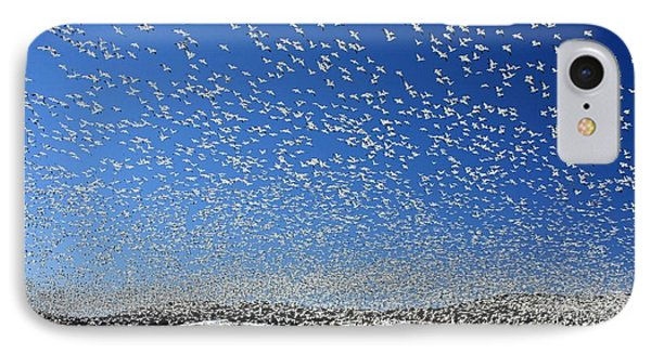 The Birds IPhone Case by Lori Deiter