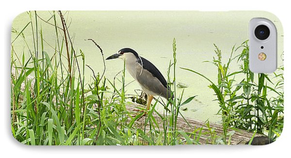 The Black-crowned Night Heron IPhone Case by Verana Stark