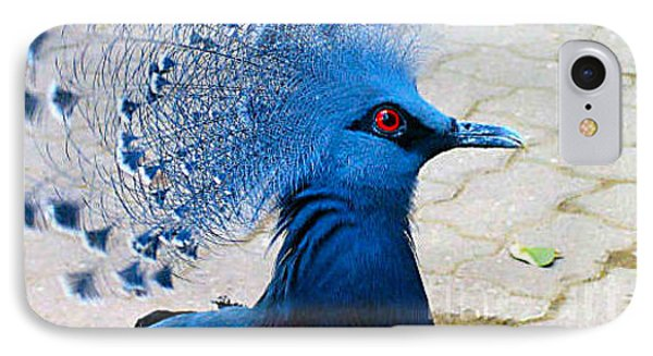 IPhone Case featuring the photograph The Bright Blue Bird by Nina Silver