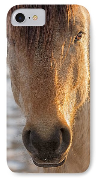 The Buckskin Stallion IPhone Case