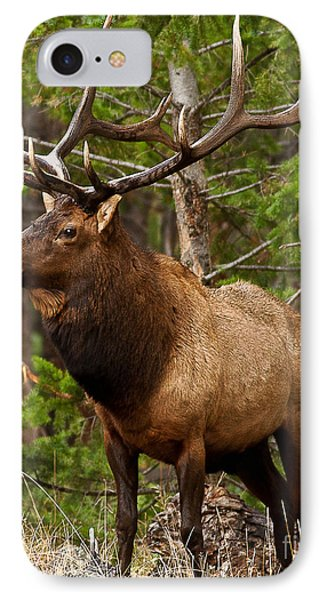 The Bull Elk IPhone Case by Steven Reed