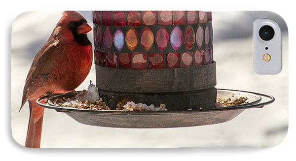 The Cardinal IPhone Case by Cathy Donohoue