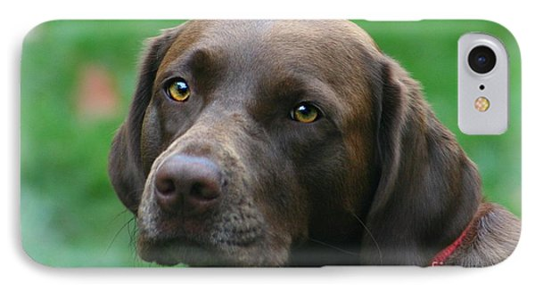 The Chocolate Lab IPhone Case by Barbara S Nickerson