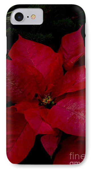 The Classic Christmas Pointsettia IPhone Case