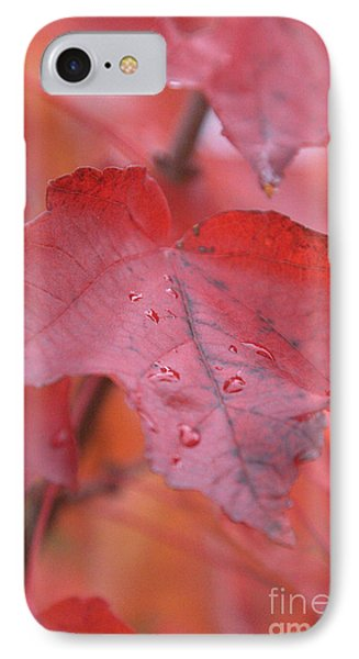The Color Of Autumn IPhone Case by Rich Collins