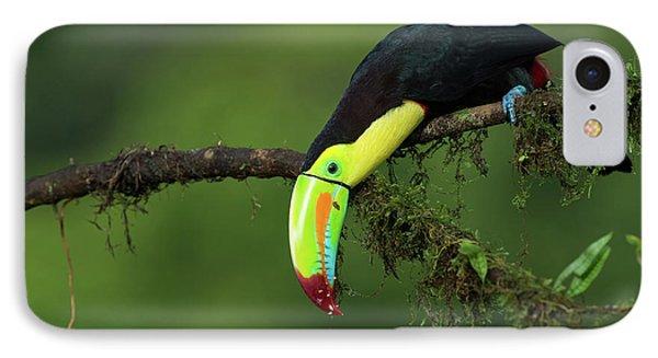 Toucan iPhone 7 Case - The Colors Of Costa Rica by Fabio Ferretto