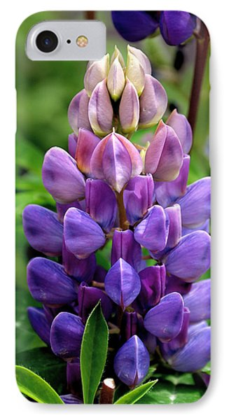 The Colors Of Lupine IPhone Case by Rona Black