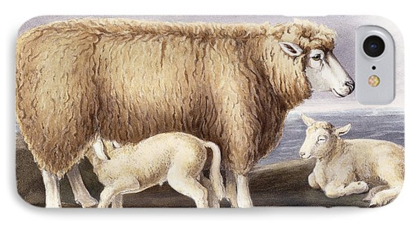 The Cotswold Breed IPhone Case by David Low