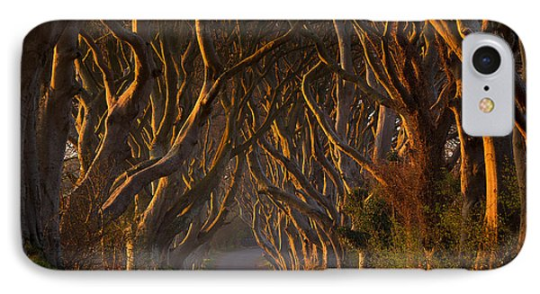 The Dark Hedges In The Morning Sunshine IPhone Case