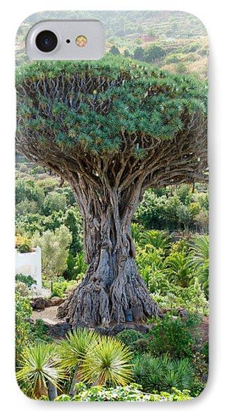 The Dragon Tree / El Drago Milenario Phone Case by Gavin Lewis