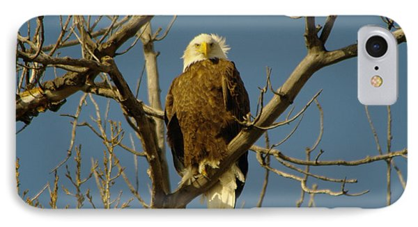 The Eagle Looks Down Phone Case by Jeff Swan