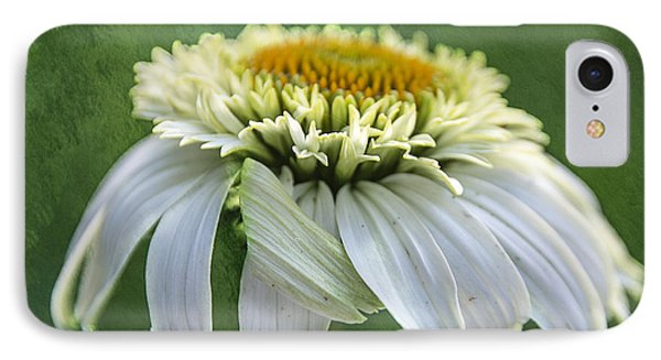 The First Coneflower IPhone Case by Terry Rowe