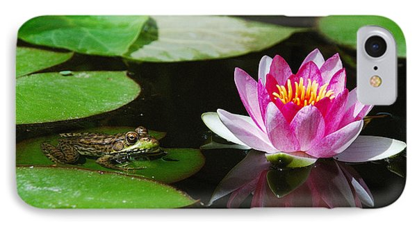 The Frog And The Lily IPhone Case by Janice Adomeit