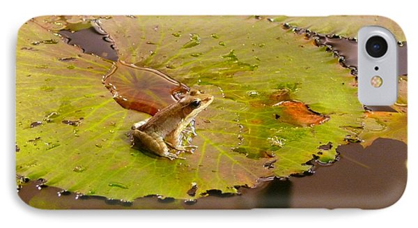 IPhone Case featuring the photograph The Frog by Evelyn Tambour
