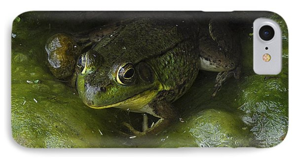 The Frog IPhone Case by Verana Stark