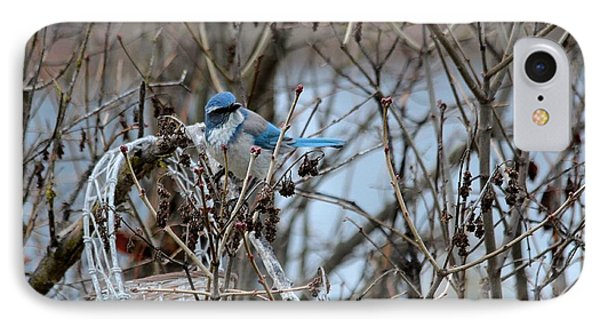 IPhone Case featuring the photograph The Gathering Blue Jay by Marjorie Imbeau