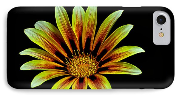 IPhone Case featuring the photograph The Gazania by Marwan Khoury