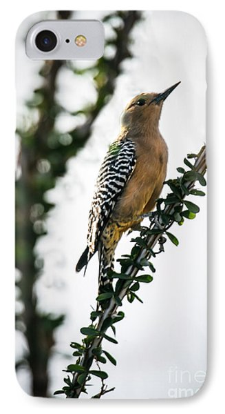 The Gila  Woodpecker Phone Case by Robert Bales